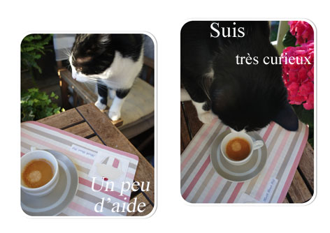 Mp-chat-curieux copie
